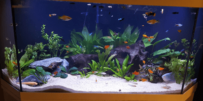 https://www.ledstripkoning.nl/fileadmin/user_upload/aquarium_led_verlichting_blog.png
